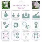 Triumph Tulip 'Gwen' details