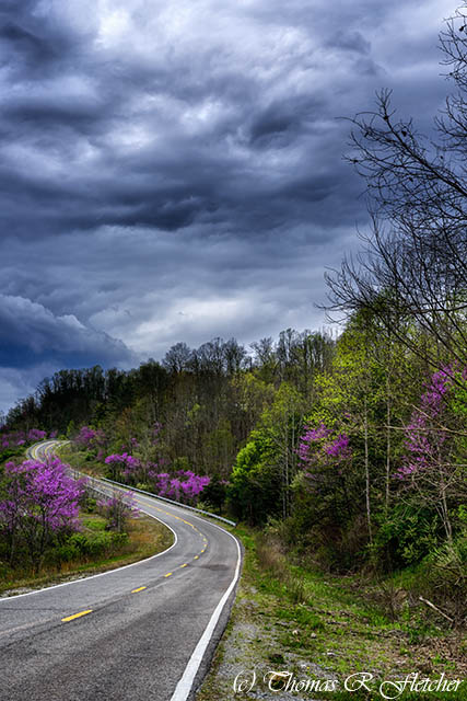 Dark Clouds, Redbud and Roadway