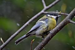 Ooh... no! Snow!!! #Spring weather & Poor bird. #6