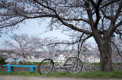 【まとめ記事】自転車・ママチャリについて