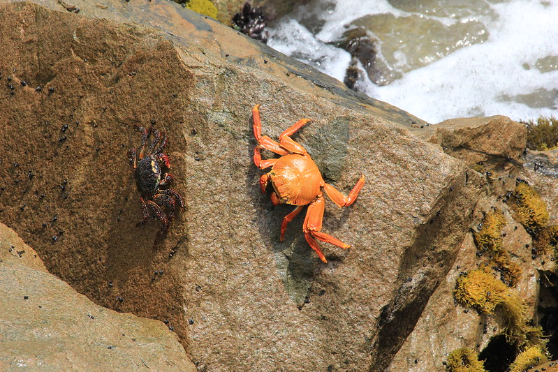 Crabs, Lima