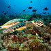 Hawsbill Turtle & Bunaken Island by Jim Patterson Photography