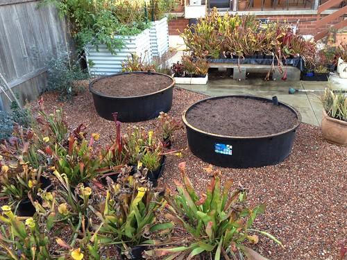filled bog gardens - Bog Garden