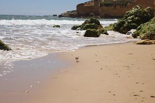 Изображение Praia Maria Luísa. ocean costa beach portugal coast playa algarve turismo gaviota albufeira acantilado rocas vegetación océano océanoatlántico erosión sedimentos physicalgeography paisajenatural geografíafísica