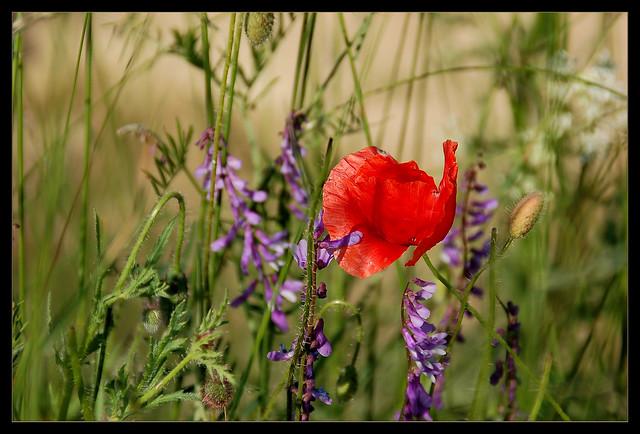 Blüten im Feld