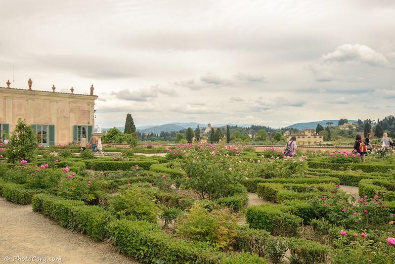 boboli garden florence peonies