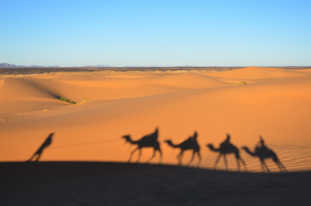 Sombra de los dromedarios, que no camellos, al amanecer en el desierto de Marruecos