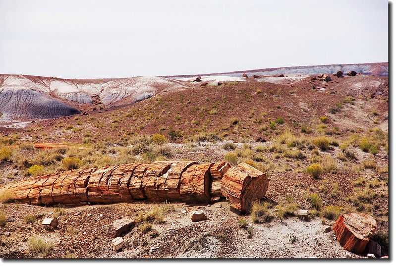 Petrified wood exposed along the Crystal Forest Loop Trail at Petrified Forest 19