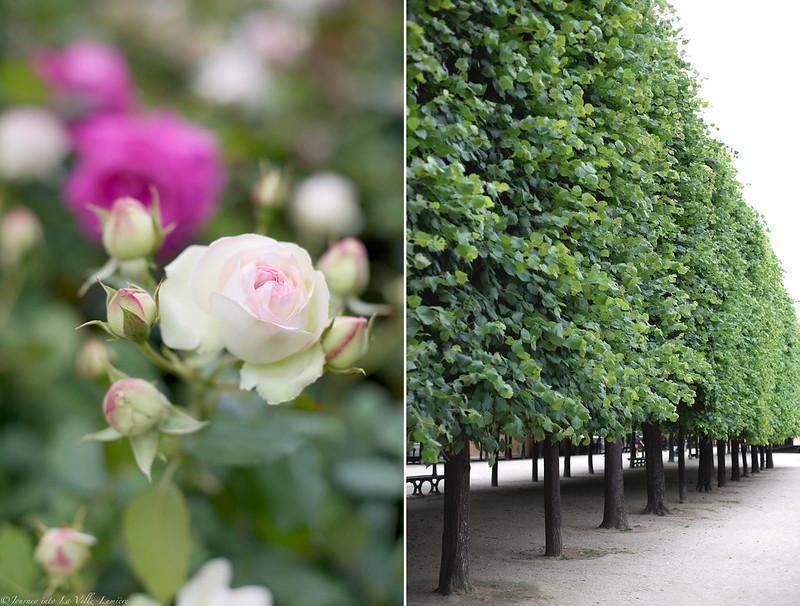 Roses, Jardin du Palais Royal