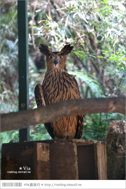 【新竹景點推薦】森林鳥花園~親子旅遊的好去處!在森林裡鳥兒與孩子們的樂園58