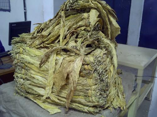 My tobacco world - Flue Cured Grading 14157776398_5c8c09600c