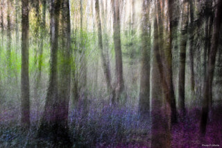 abstractive forest-13