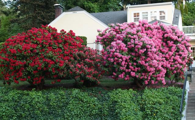 2014-05-19 Garden St.