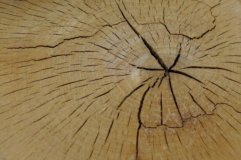 [FIL OUVERT] le bois sous toutes ses formes 14313269013_85a313427e_c