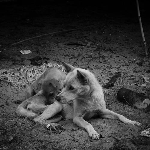 Mommy and pup at a seaside village, Simpang Mengayau, Kudat.