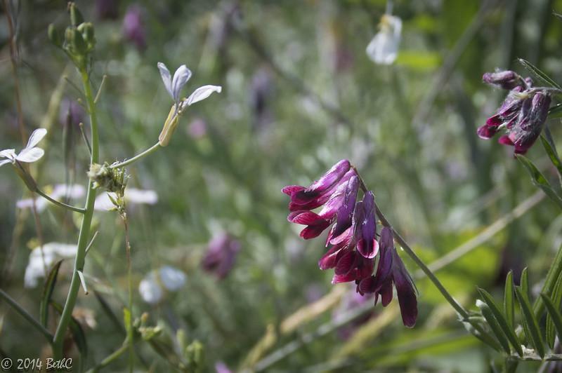 149/365 Wildflower Frenzy