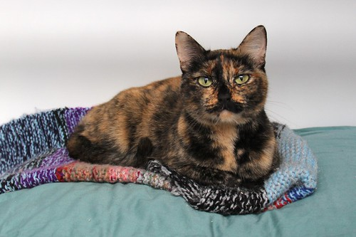 On Calico Cats Amp Tortoiseshell Cats Books Life Is