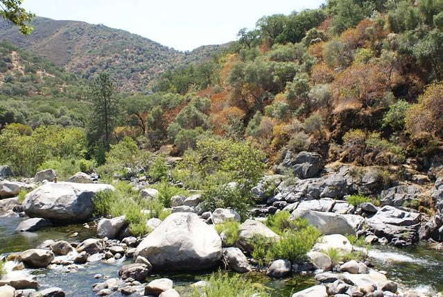 Des rivières fraîches et rapides à l'entrée du Sequoia Park côté Three Rivers