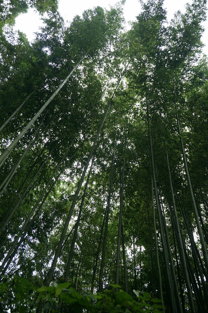 Bamboo at Arashiyama, Kyoto