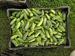 vegetable, green, produce, edamame, food, crop,