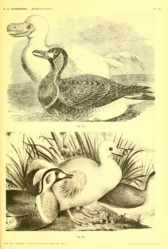 005-Dodo-studiën…1917- Anthonie C. Oudemans- Biodiversity Library