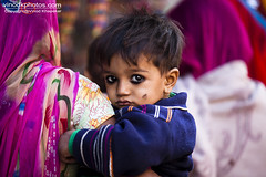 Innocent- Pushkar Camel Fair.