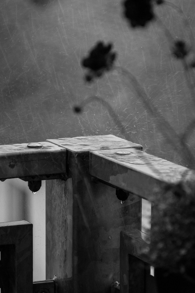 27.07.2014 Raining cats and dogs