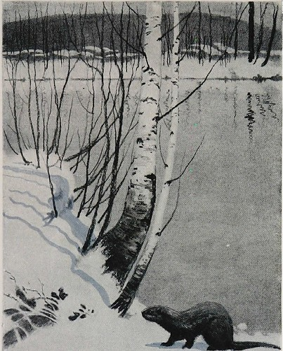 Black and white painting of a snowy riverbank with birch trees overhanging. The water is still and reflects the treetrunks. An otter stands on the nearby bank.
