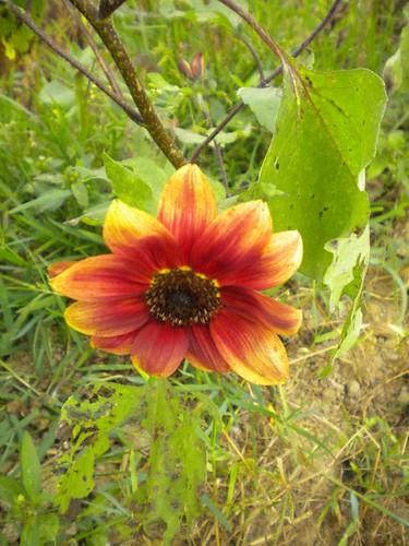 桃園觀音好玩的向陽農場 (4)