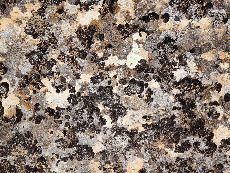 rock-lichen-tasmania