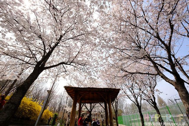 首爾林seoul forest (30)