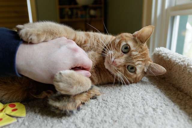 Let the Belly Rub Commence!