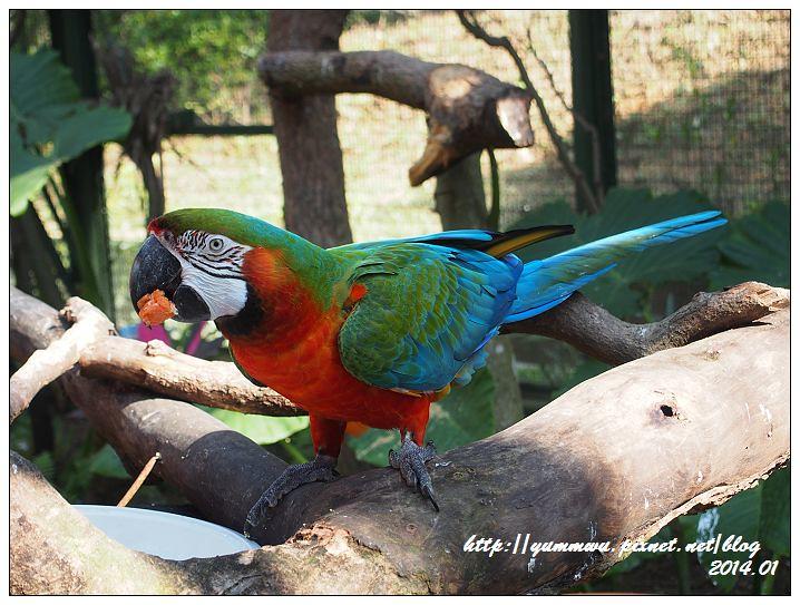 森林鳥花園24