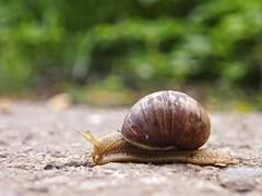 Snail Bokeh