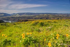 78 of 365 project: Balsamroot and plateaus