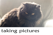 takingpictures