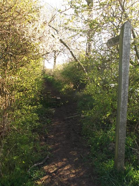Appleby - Langwathby Trek 19.4.14 021