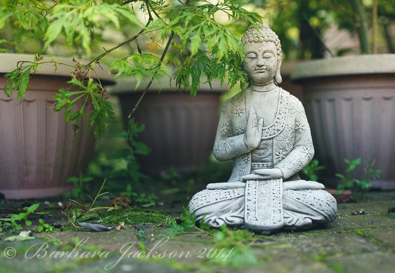 Birthday Buddha...