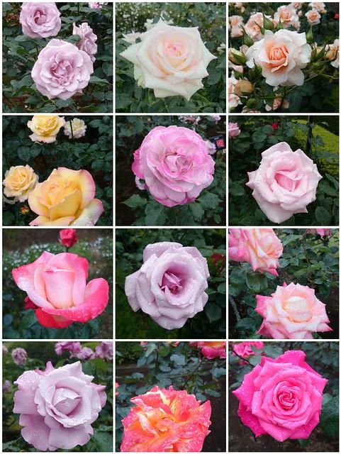 Roses of Kyu-Furukawa Garden