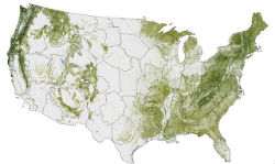 NASA's Earth Observatory: Where the trees are