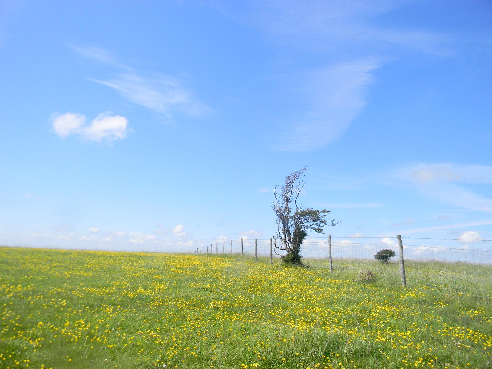 Lone bush Lewes Circular via West Firle