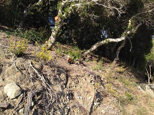 IMG_2564 Wild flowers on Sawyer Camp Trail