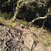 IMG 2564 Wild flowers on Sawyer Camp Trail