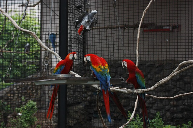 (Moscow zoo) parrot