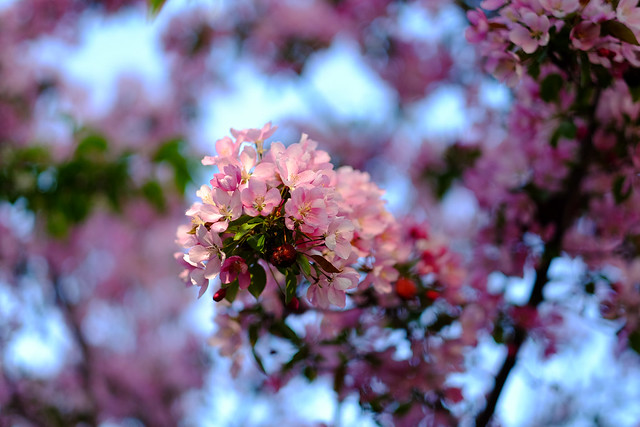 A Burst of Blossoms-8