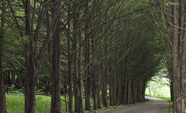A Wooded Road