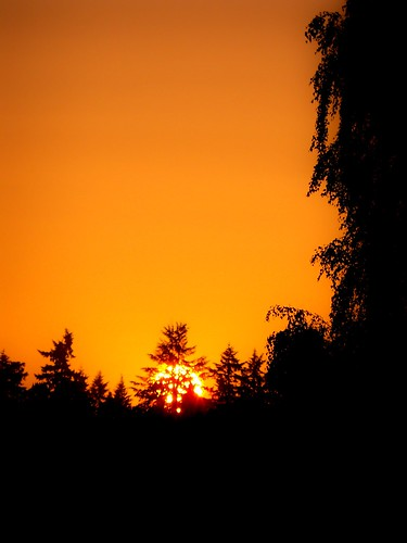 sunset sun weather silhouette settingsun sunsetcolors silhouetteoftrees shadesoforange silhouetteinthesunset sunsetinvancouverwa beautifuleveningweather