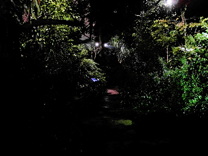 singapore night safari 17
