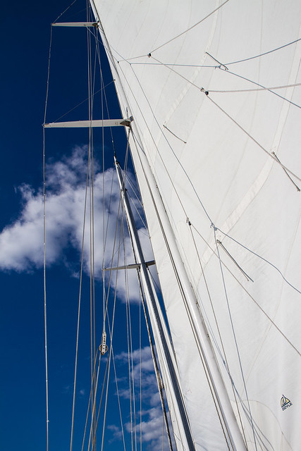 Shearwater harbor sail