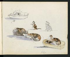 Cats portrayed in a watercolour and pencil drawing / Dessin de chats à l'aquarelle et au crayon